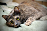 Tortie cat portrait by Jozu Photography